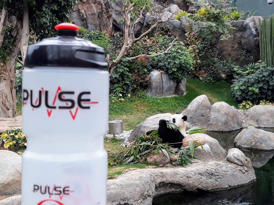Pulse water bottle is in the foreground, a small panda eating some bamboo and beside a rock pool is in the background - Siobhán Quain, China Ferry Terminal, Hong Kong, posted 5th January 2018.